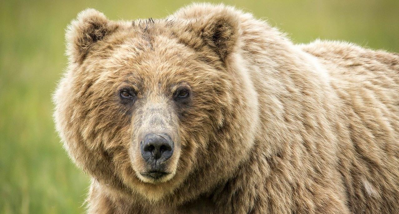 Bärenangriff vermeiden