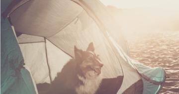 Hundezelt Outdoor