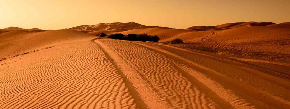 In der Wüste überleben