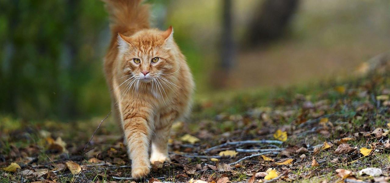 Katze beim Wandern