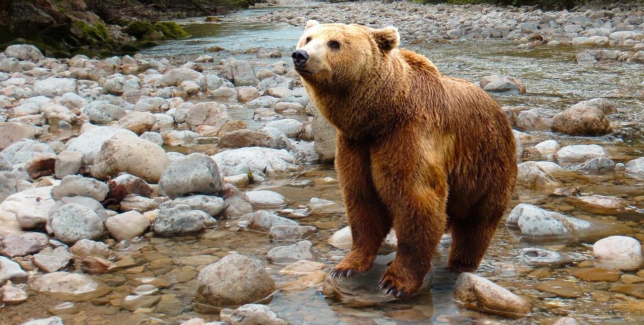 Verhalten bei Bärenngriffen