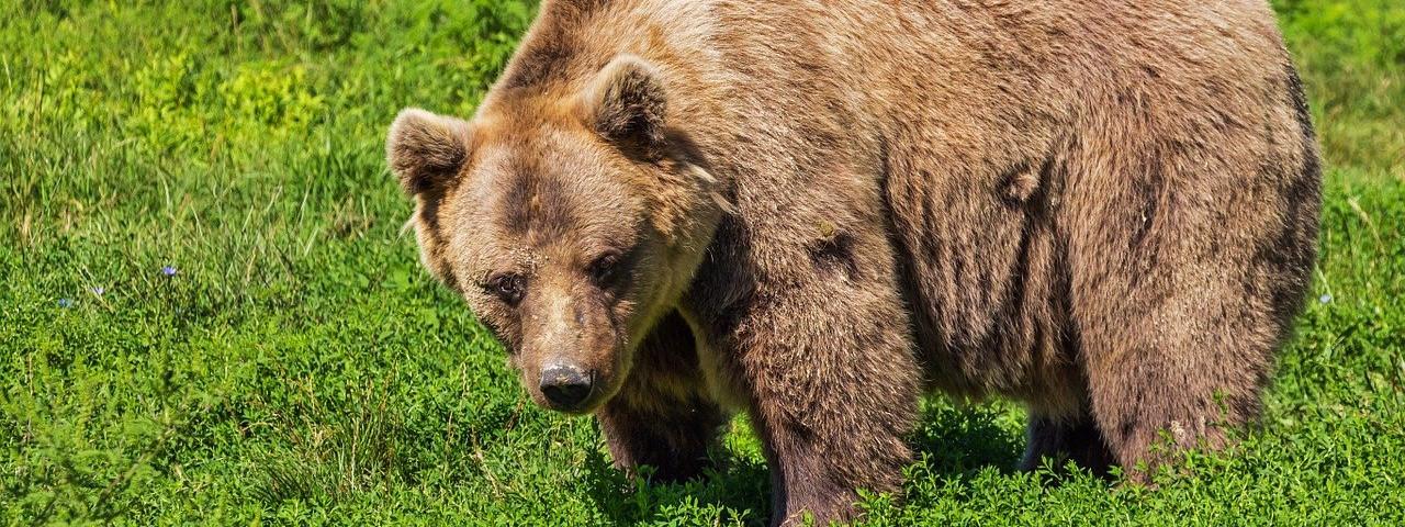 Verhalten in Bärenregionen - Tipps und Tricks