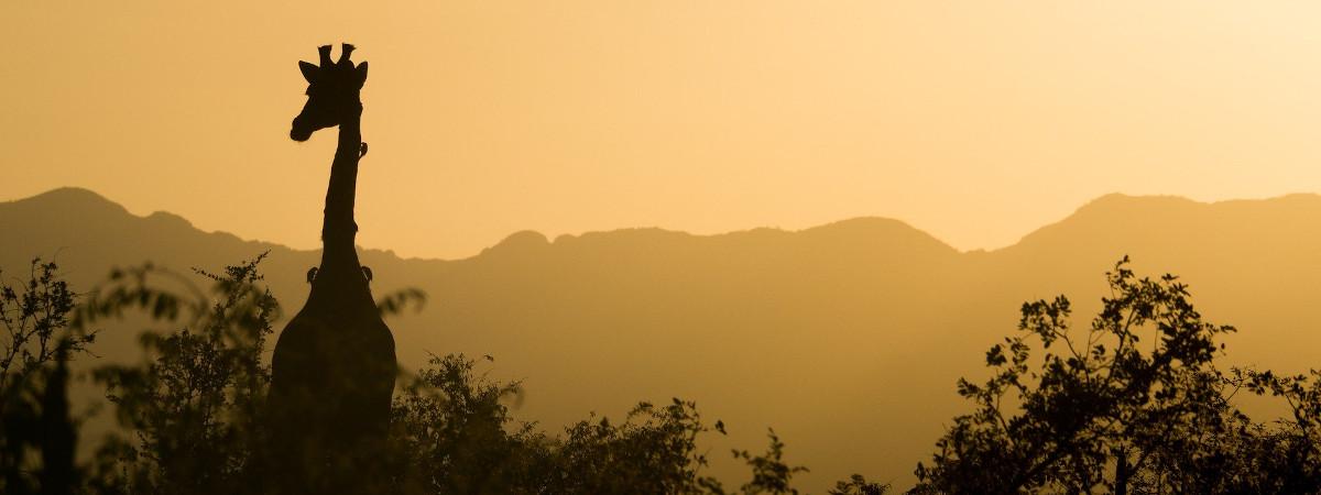 Wandern in Afrika